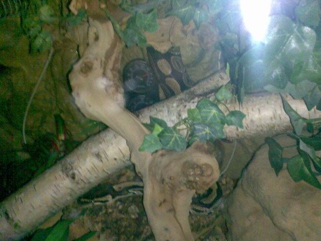 Pic 3 von mein K�nigspython auf n�chtliche Tour