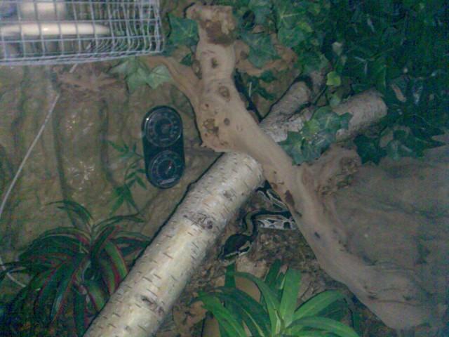 Mein K�nigspython auf Nachttour