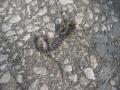 Welche Schlange ist das? Habe sie in den Osterferien in der T�rkei gesehen.
